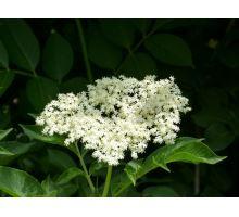 AWA herbs Čierny bez kvet 100g