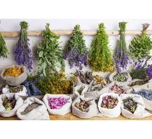 5 základných liečivých byliniek pre jar