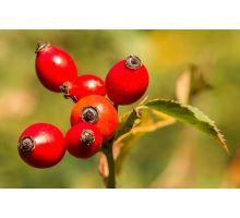 AWA herbs Šípek plod drvený 100g