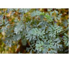 AWA herbs Routa vňať 100g