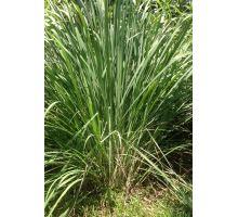 AWA herbs Citrónová tráva 100g